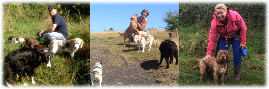Whether you need a dog walker  cat sitting or small animal care  it s so  important that you find somebody you can trust Dog walker   Cat feeding   pet sitting   Bath Tails. Dog Walkers Bath Area. Home Design Ideas